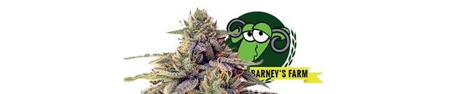 Shiskaberry (Barney's Farm)