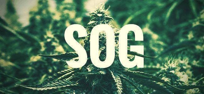 SOG—SEA OF GREEN