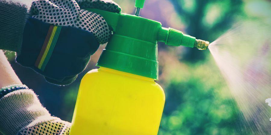 Les Insecticides Peuvent Nuire À Votre Cactus Par Phototoxicité
