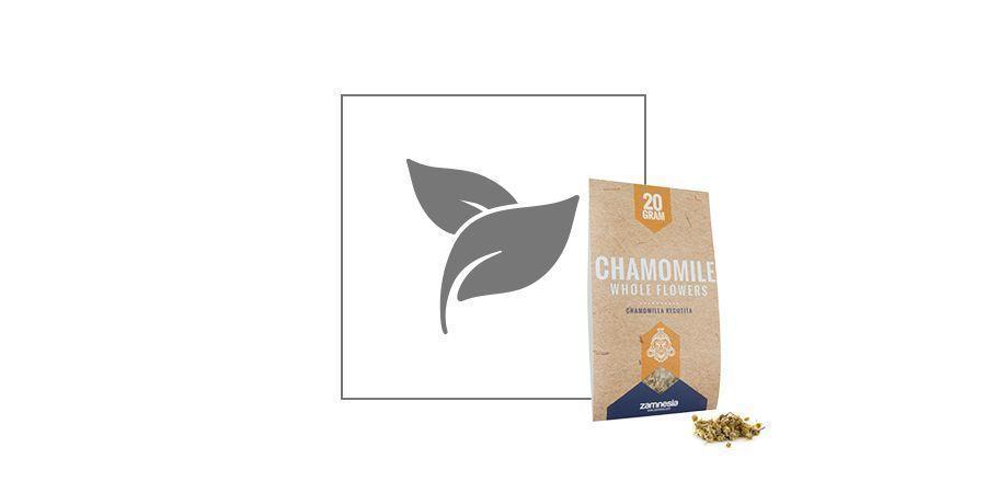 Camomille (Matricaria recutita)