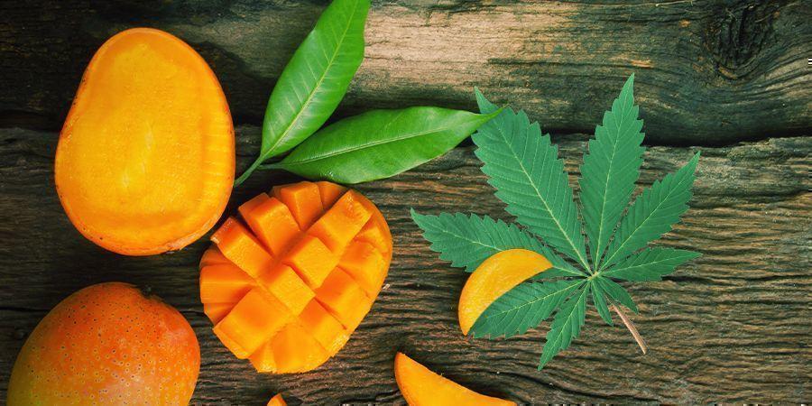 Consommer Son Cannabis Accompagné D'une Mangue