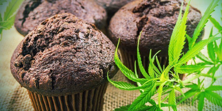 Biodisponibilité : Comestibles Au Cannabis