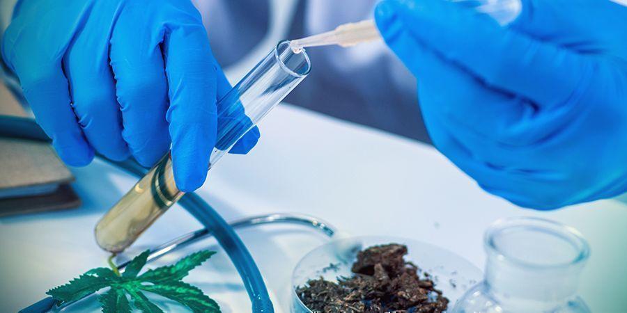 Le THC : Un Puissant Remède Naturel