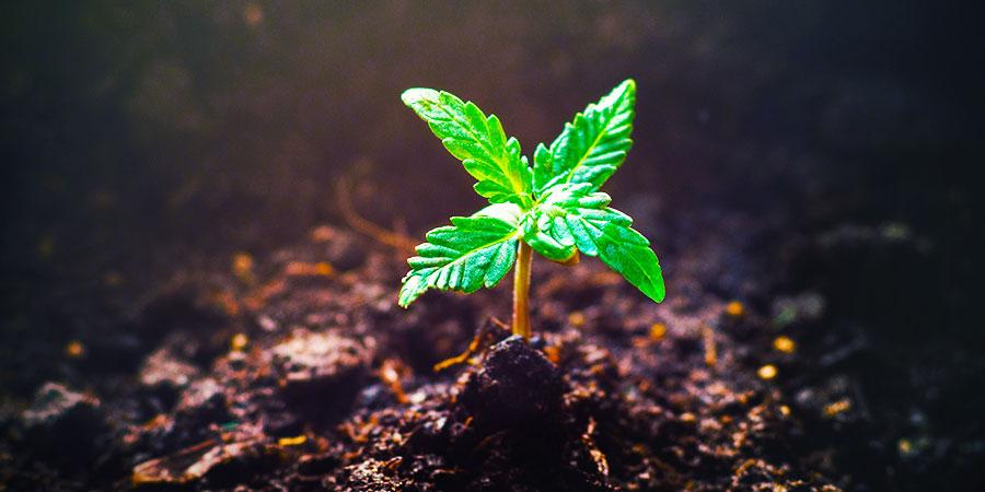 Il Existe Encore D'Autres Plantes