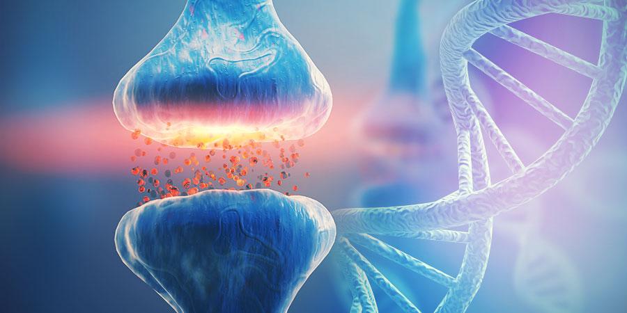 L'ADN ET LE SYSTÈME ENDOCANNABINOÏDE