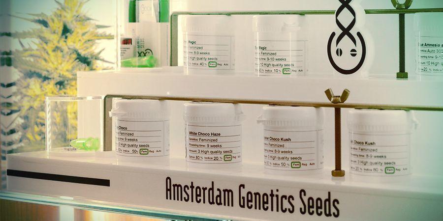 BANQUE DE GRAINES DU MOIS : AMSTERDAM GENETICS