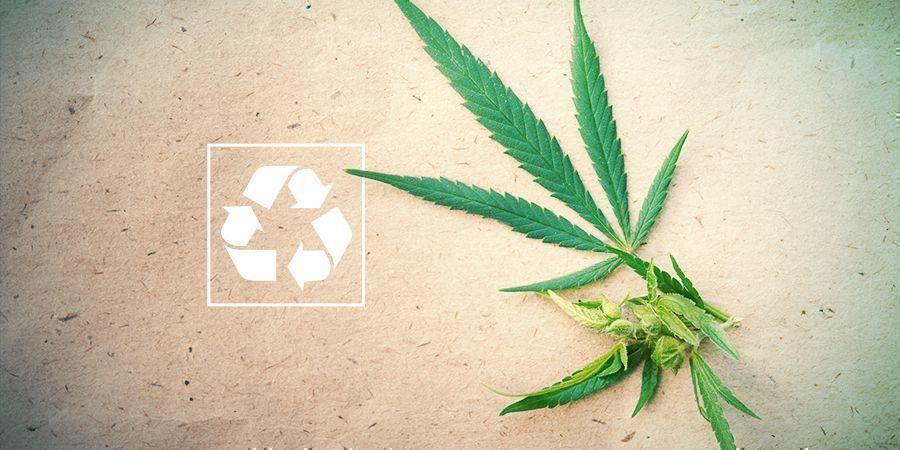 Le Cannabis Et L'Environnement
