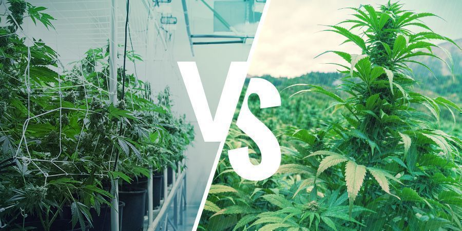 Cannabis Héritage Vs. Landrace : Les Nuances