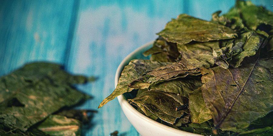 Qu'est-ce Que L'ayahuasca ?