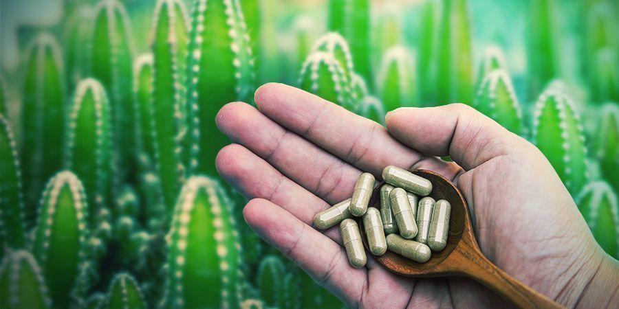 La Mescaline Est Disponible En Pilules Ou En Microdoses