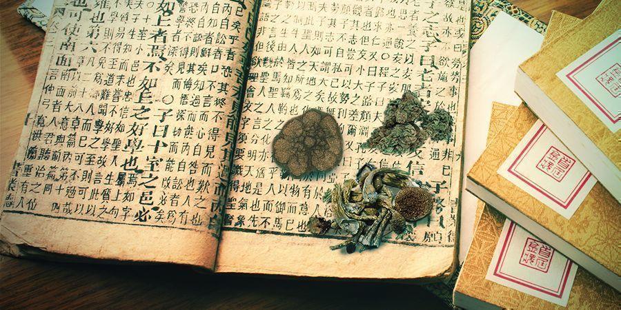Cannabis, Champignons, Peyotl—Antiques Remèdes Et Guides Spirituels