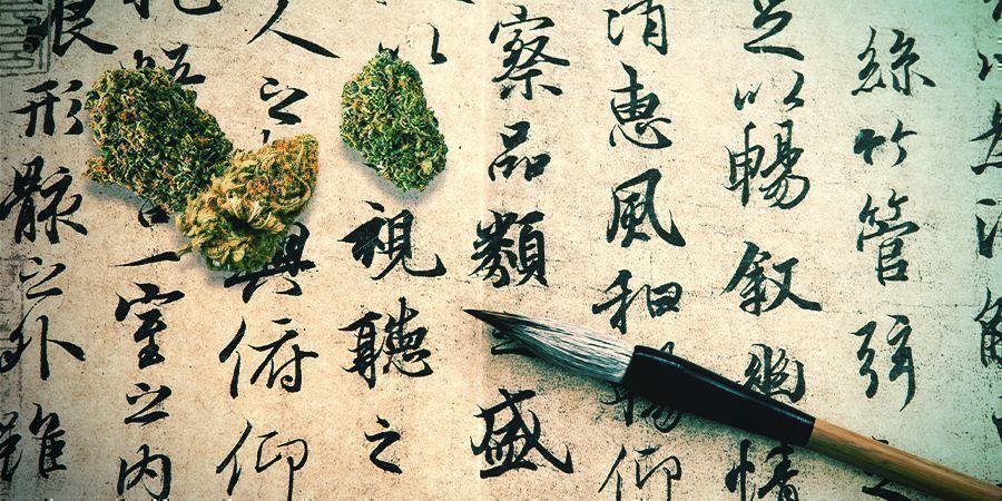 Le Cannabis : Un Médicament Oublié Depuis Longtemps