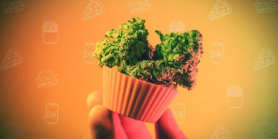 Comment Doser Le Cannabis Alimentaire