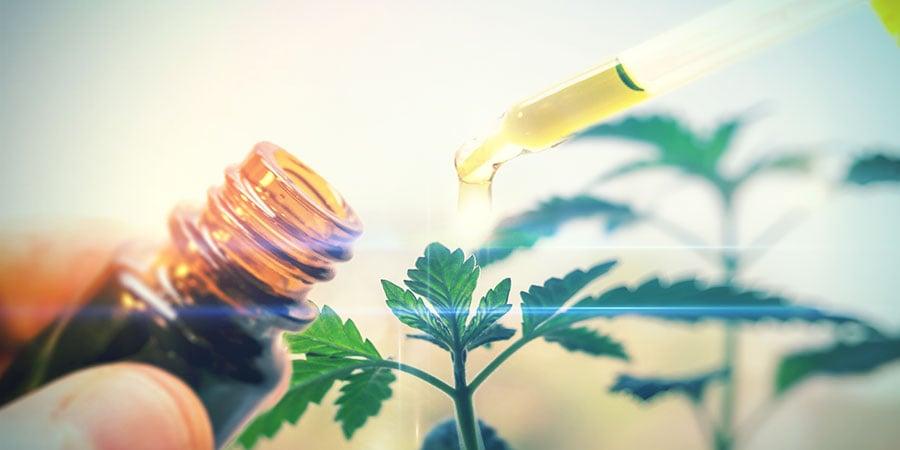 Qu'est-ce Que Le Cannabis CBD?