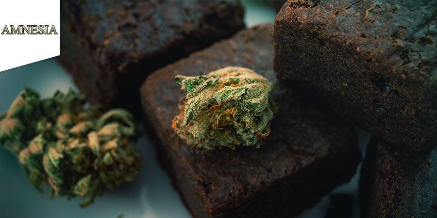 Coffeeshop Amnesia Amsterdam - Comestibles Au Cannabis