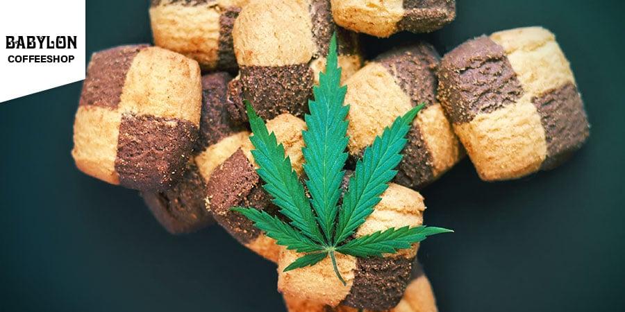 Coffeeshop Babylon Amsterdam - Comestibles Au Cannabis