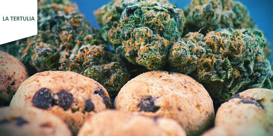 Coffeeshop La Tertulia Amsterdam - Comestibles Au Cannabis