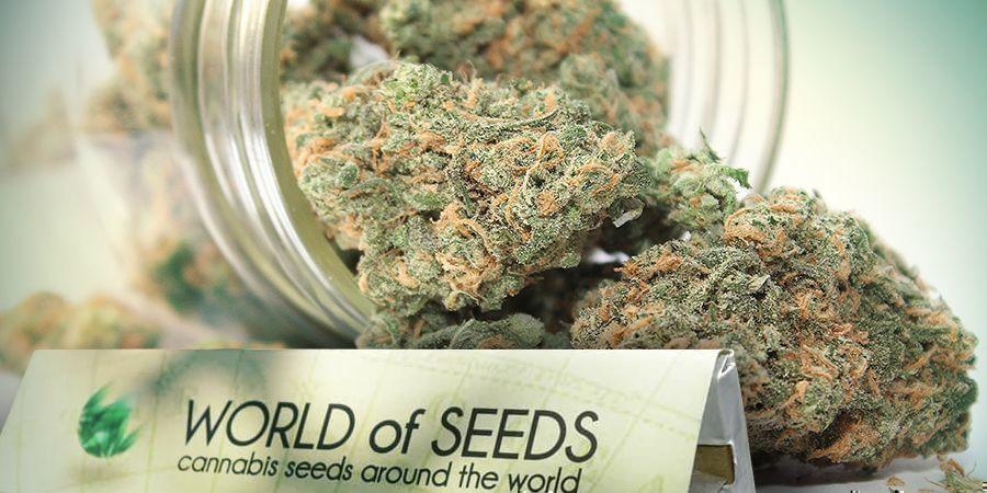 World Of Seeds - Des Génétiques Pour Tout Le Monde