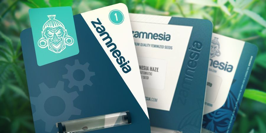 Zamnesia Seeds : Un Humble Commencement