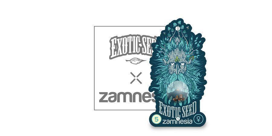 Black Zkittlez (Exotic Seed X Zamnesia) Féminisée