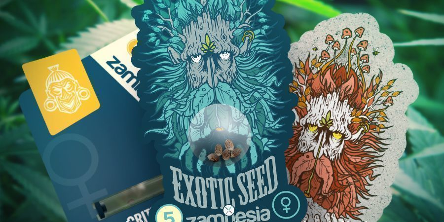 ZAMNESIA ET EXOTIC SEEDS : UNE COLLABORATION PUISSANTE