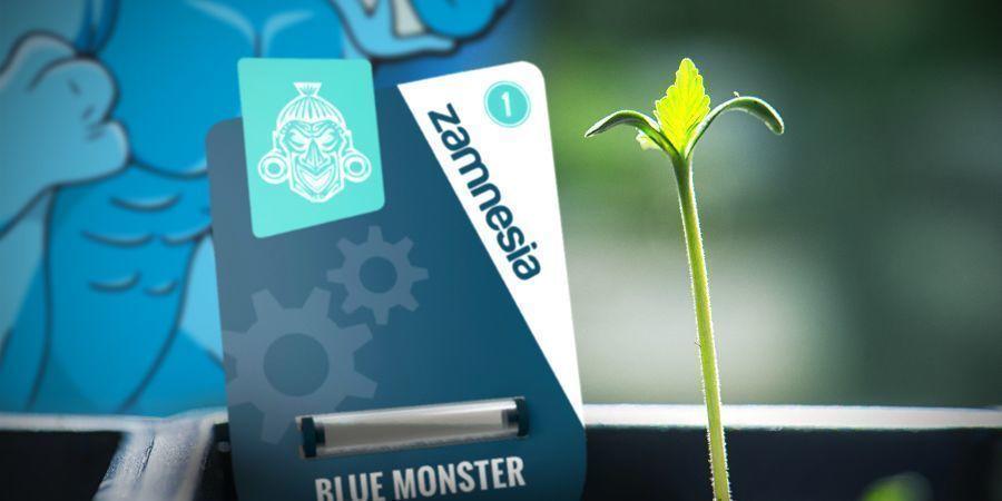Cultiver La Blue Monster Automatic