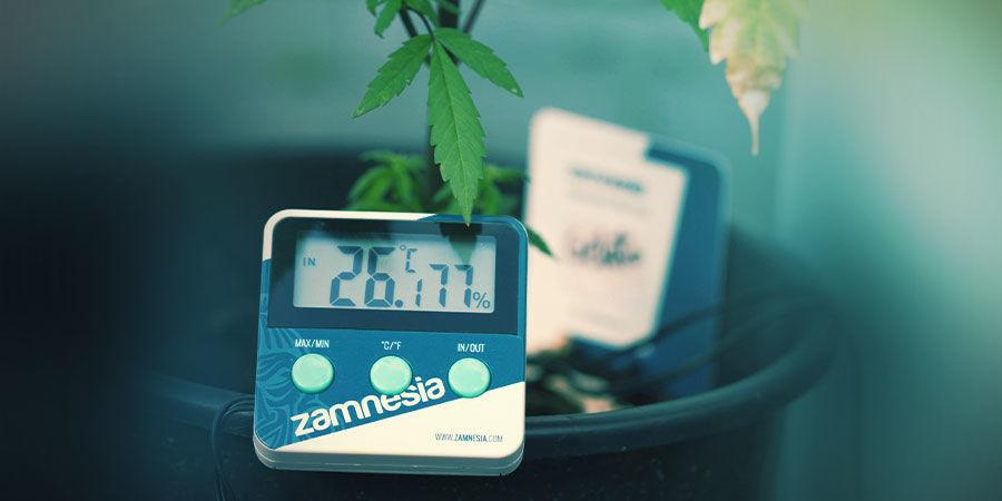 Espace De Culture Du Cannabis : La Température Et L'Humidité