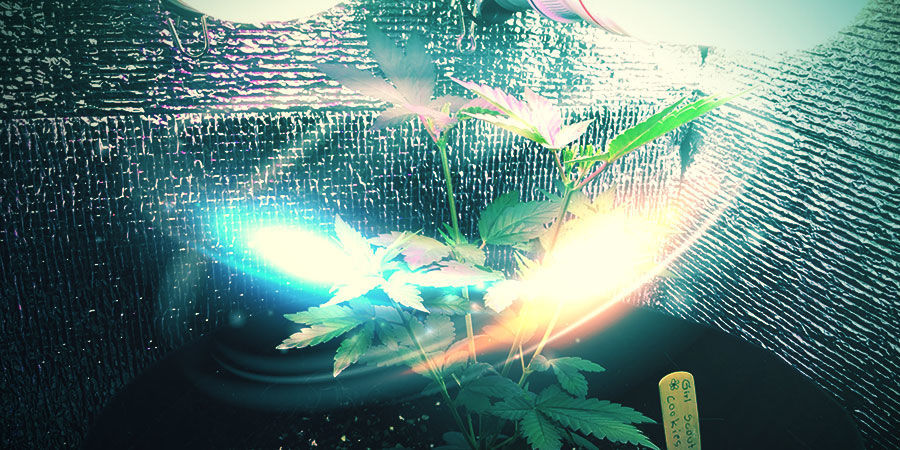 Préparer Les Murs De Votre Espace De Culture Du Cannabis