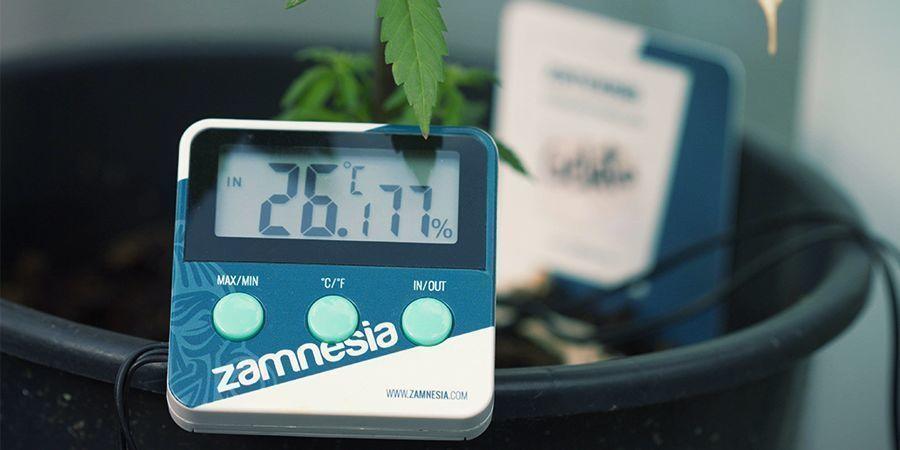 Thermomètre/Hygromètre pour cannabis