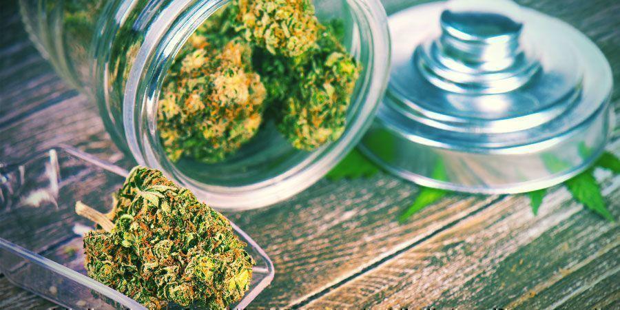 Devez-Vous Alimenter Votre Sec Avec Du Cannabis?