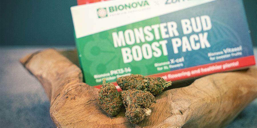 Qu'Est-Ce Que Le Pack Monster Bud Boost ?