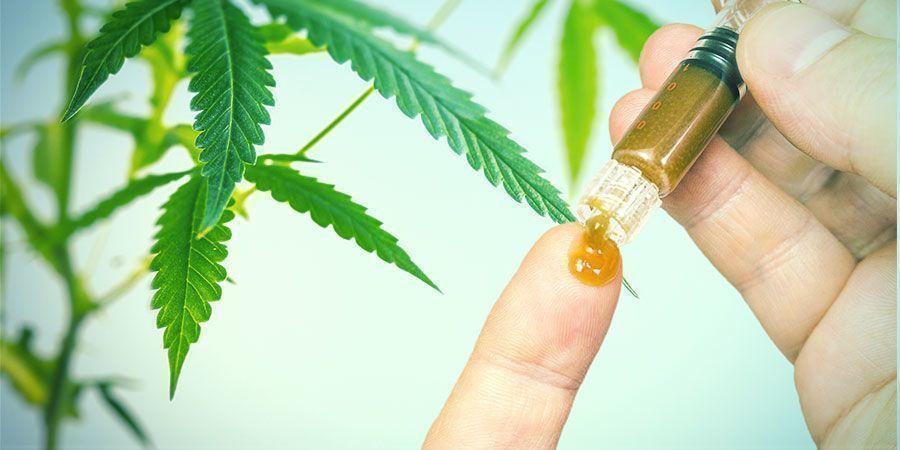 Les Bienfaits des Racines de Cannabis