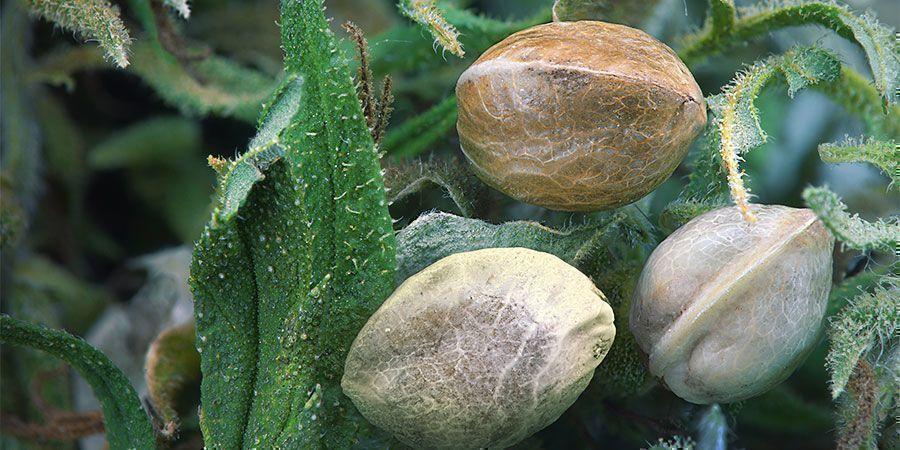 Bienfaits Du Sel D'Epsom : Améliore l'assimilation de nutriments