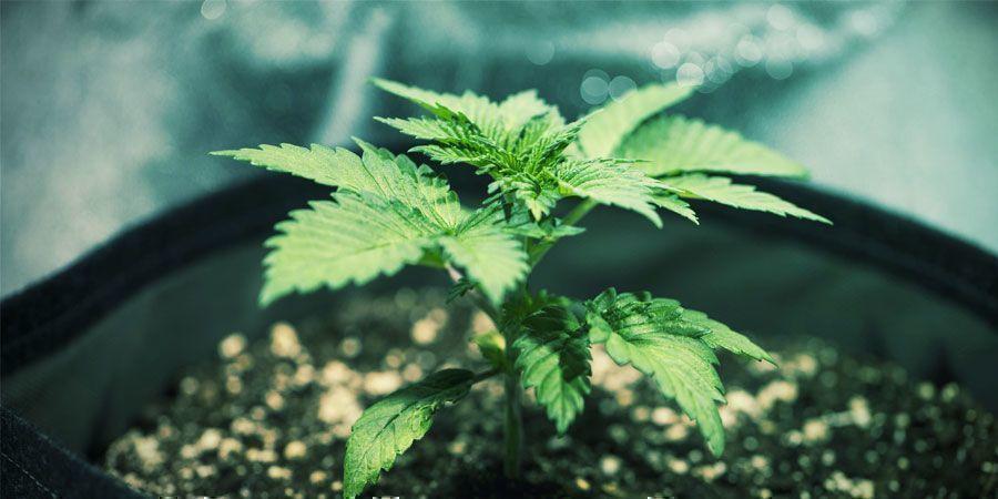 Drainage - Cultiver Du Cannabis