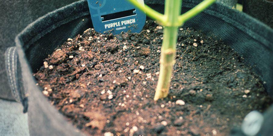 Flexibilité - Cultiver Du Cannabis