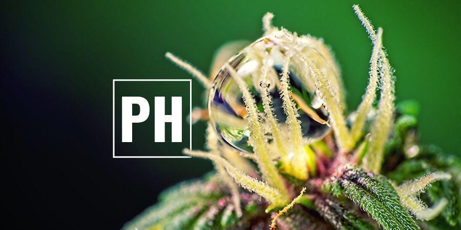 Optimiser Les Niveaux De pH du cannabis