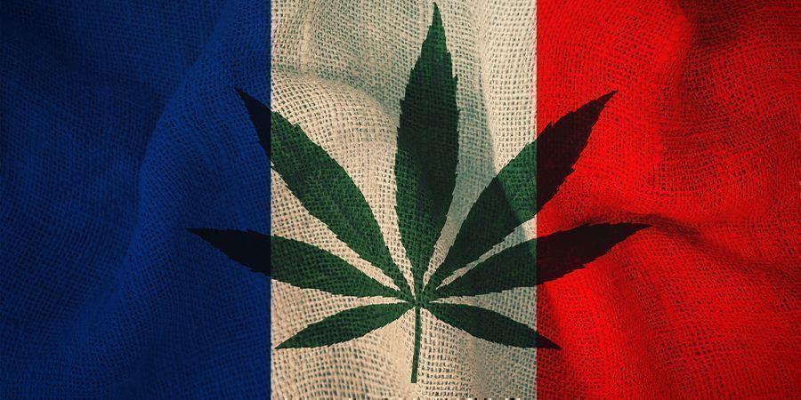 La France et Le Cannabis : Le Plan Du Comité