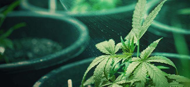 Comment Savoir Quand Et De Quelle Quantité D'Eau La Plante A Besoin ?