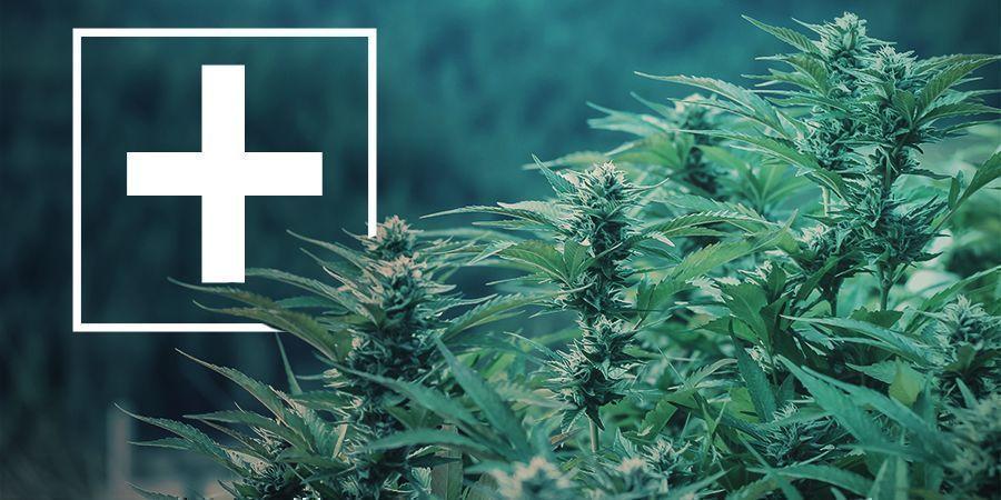 Avantages des Variétés de Cannabis à Floraison Rapide