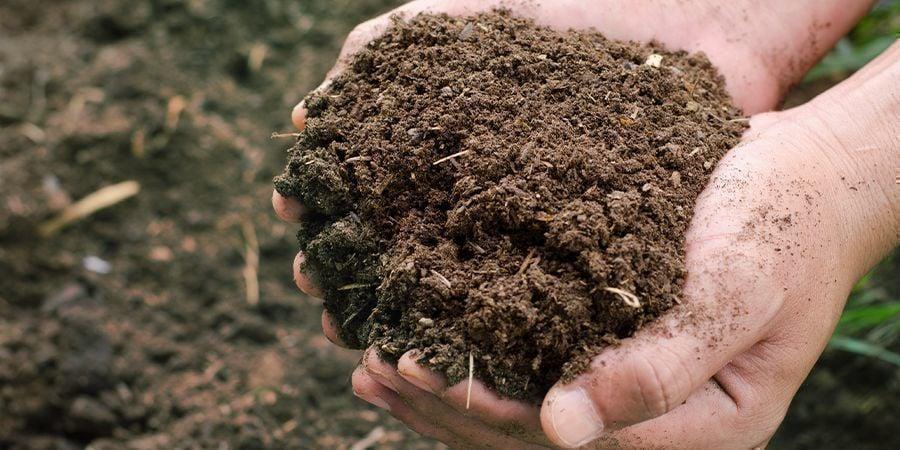 Compost Sec Et Fibreux