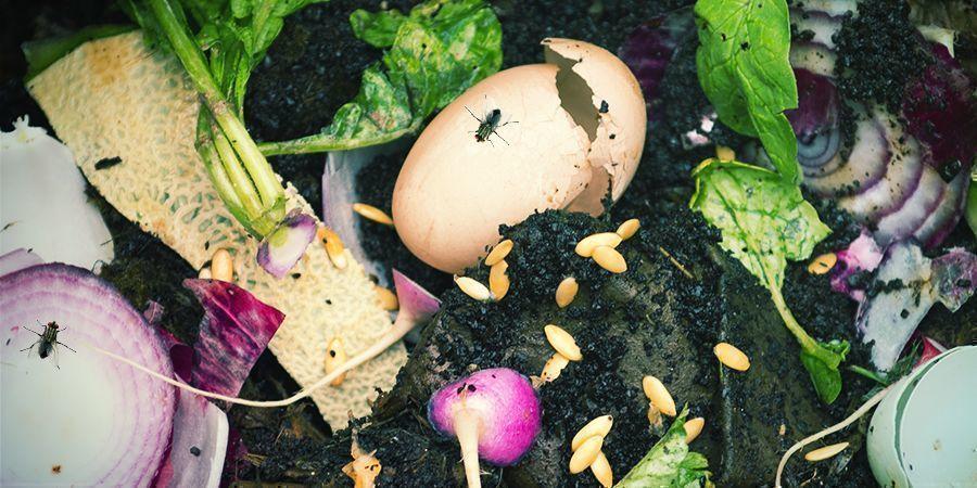 Infestations De Mouches Compost