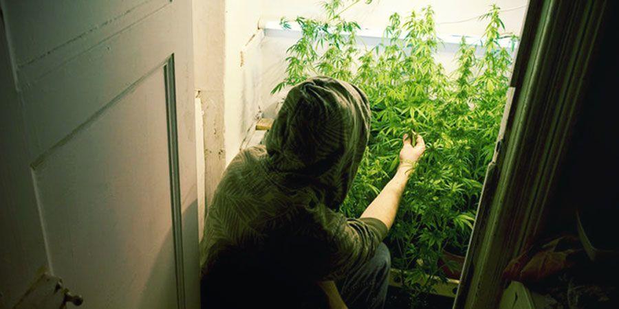 Cultiver De L'Herbe Dans Votre Placard