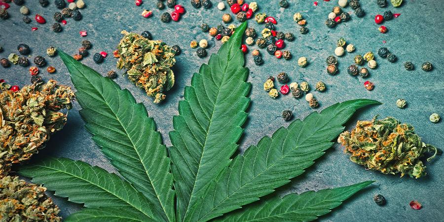 Bêta-Caryophyllène dans le cannabis