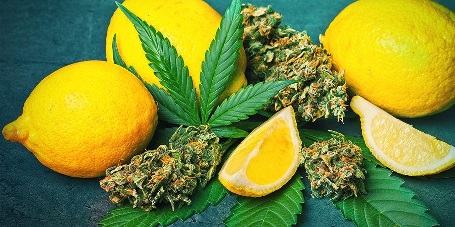 Limonène dans le cannabis
