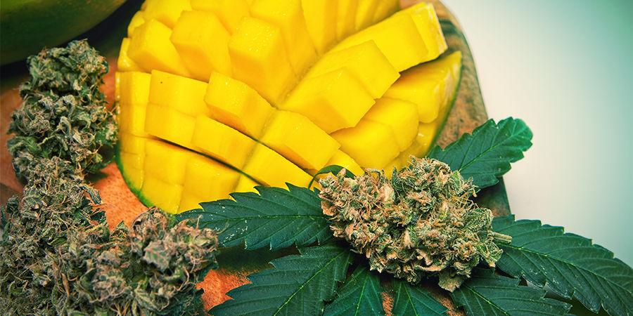 Myrcène dans le cannabis