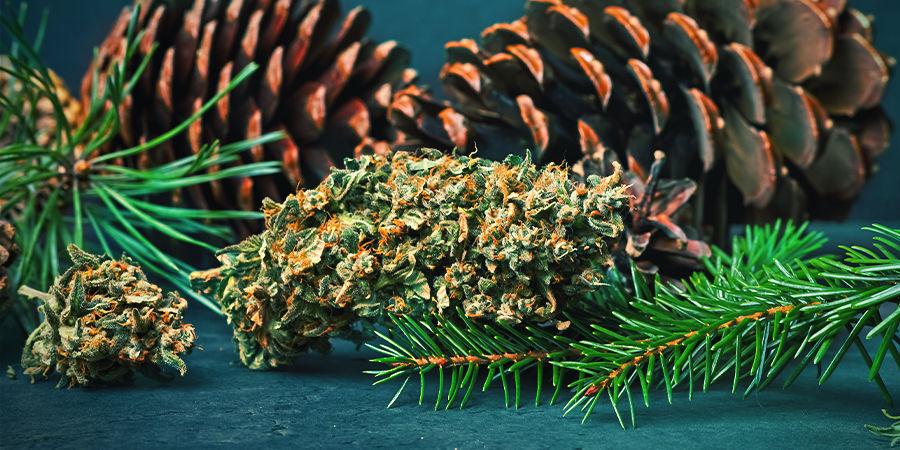 Pinène dans le cannabis