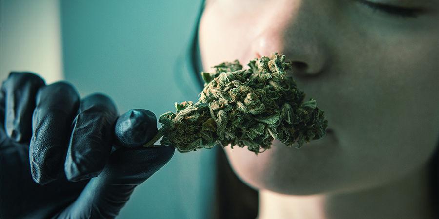 Pourquoi Les Terpènes Du Cannabis Sont Importants