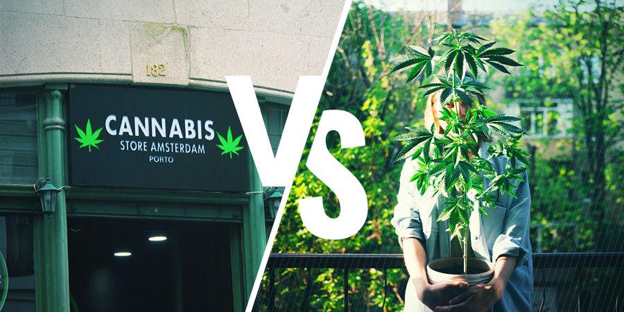 Comment Acquérir Du Cannabis