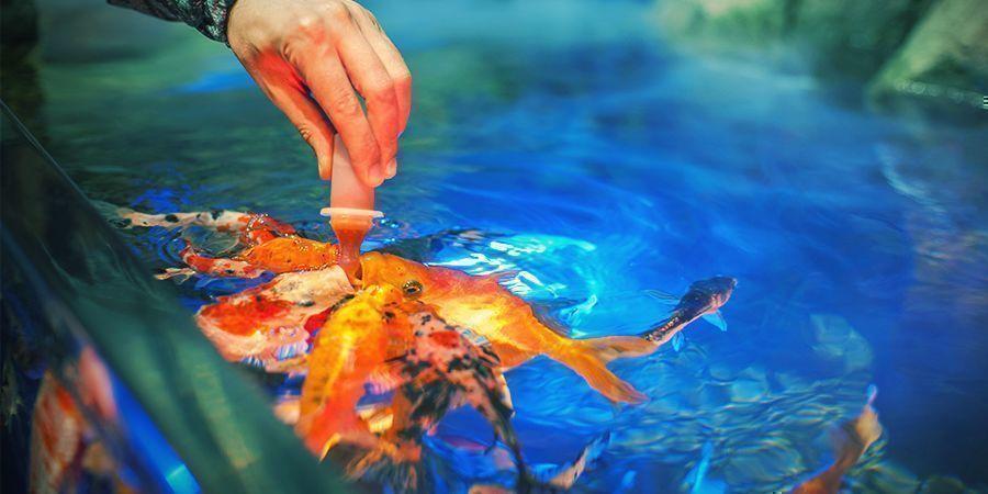 Astuces Pour Une Culture En Aquaponie
