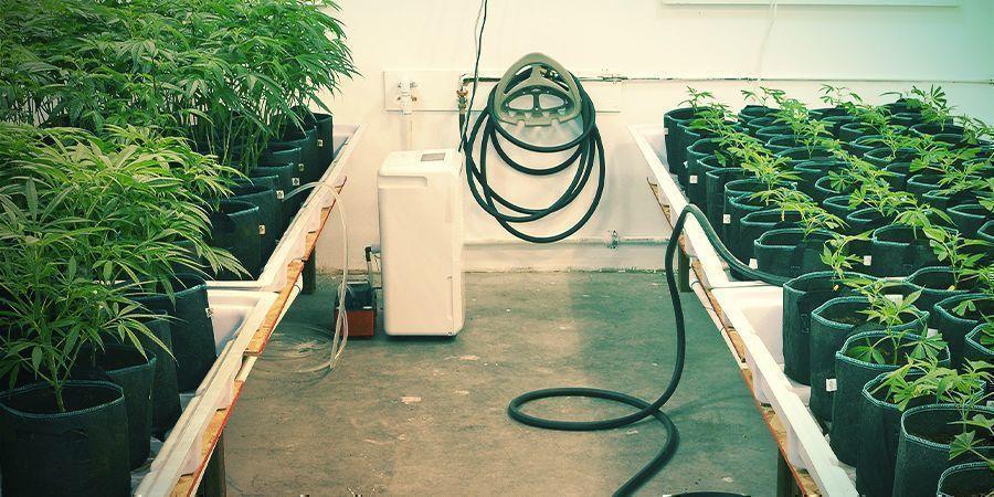 Gardez Tout Bien Propre - Culture Verticale Du Cannabis
